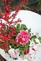 寒风中盛开世博红 植物园世博牡丹展即将开幕