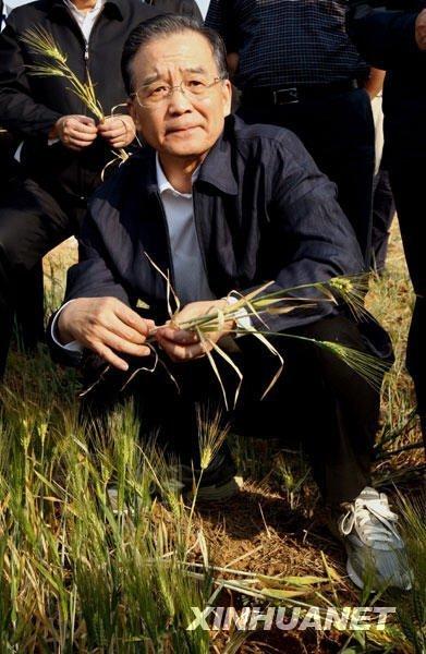 3月19日,温家宝来到陆良县芳华镇狮子口村万亩大麦示范田,实地察看农作物受灾情况。新华社记者姚大伟摄