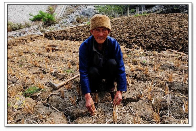 贞丰县两位80高龄留守老人在自家干旱的土地里翻土,等待下雨,地边水池已经干涸。 章静摄