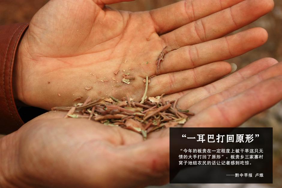 干了的花椒树叶子很脆