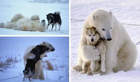 组图:让人落泪的动物友情