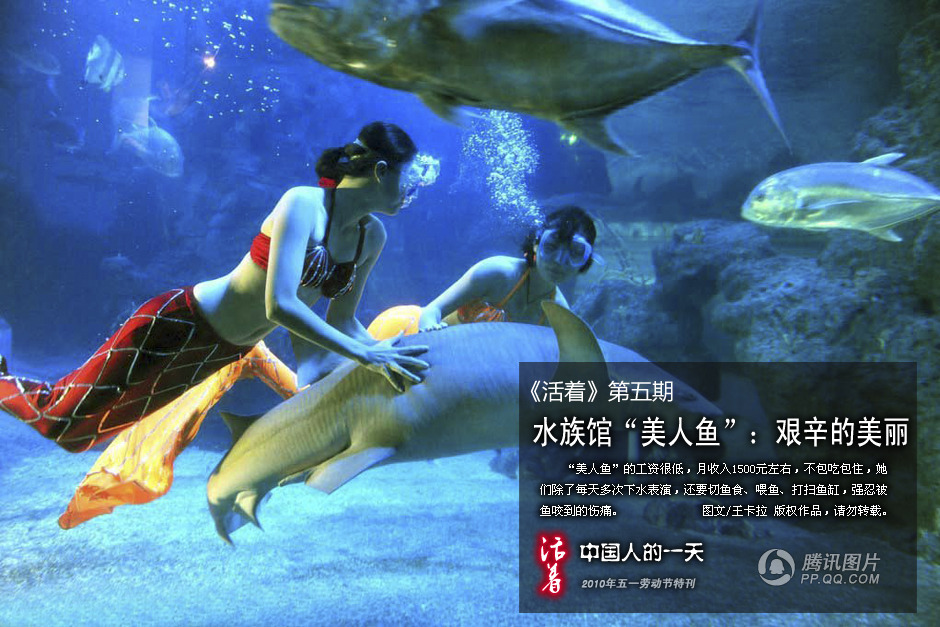 水族馆的美人鱼:艰辛的美丽_2010劳动节图片