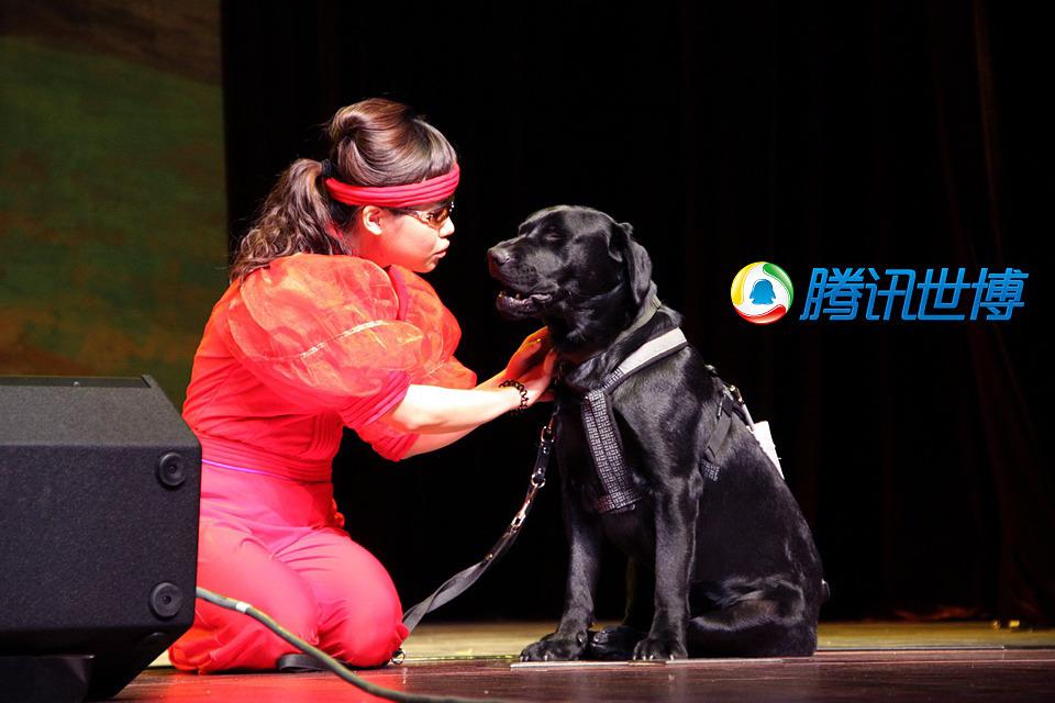 可爱的导盲犬乖乖地协助盲人演员表演 衣薇 图/文