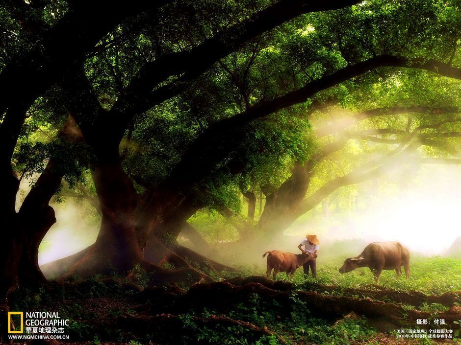 2010《国家地理》摄影大赛中国区作品[23P] - kfyge - 鱼翔浅底的博客