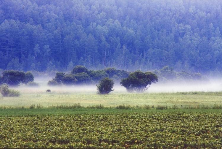 《晨雾》 摄影:汪海龙