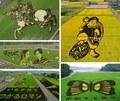组图:18幅令人惊叹的日本稻田艺术作品