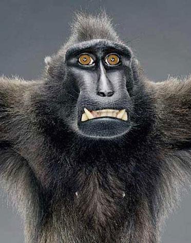 长得像猴子表情包分享展示
