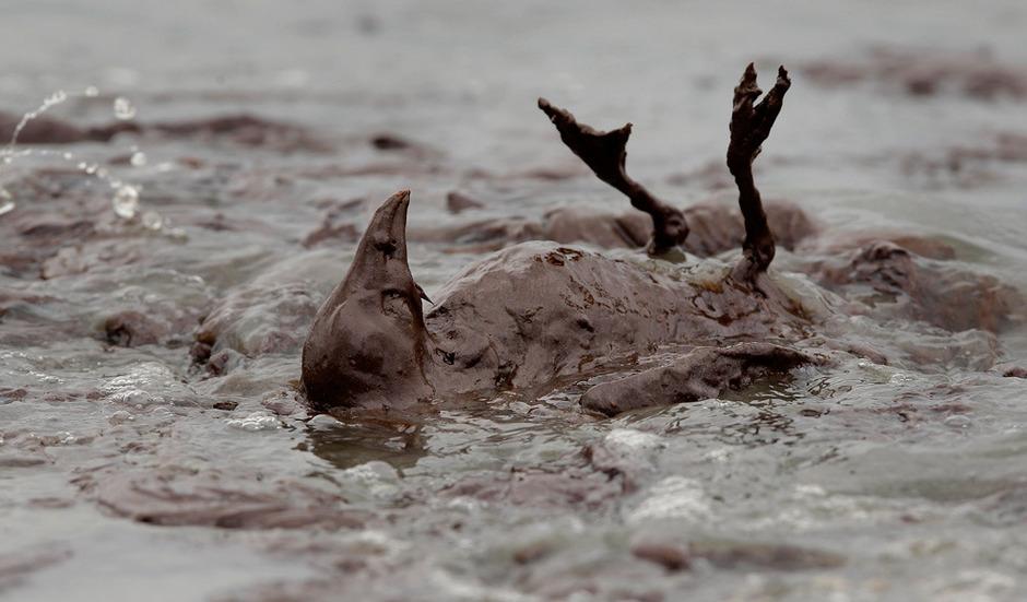 地球灾难之:可怜的海鸟