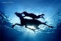 高清:如梦如幻 唯美的水下摄影作品