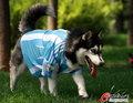 可爱小狗送别阿根廷