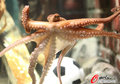 组图:章鱼帝大显神威 世界杯8场预测全中