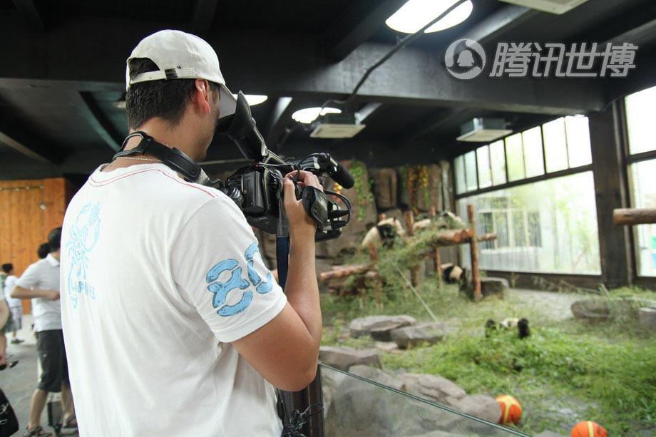 外国记者同样关注我们的国宝大熊猫