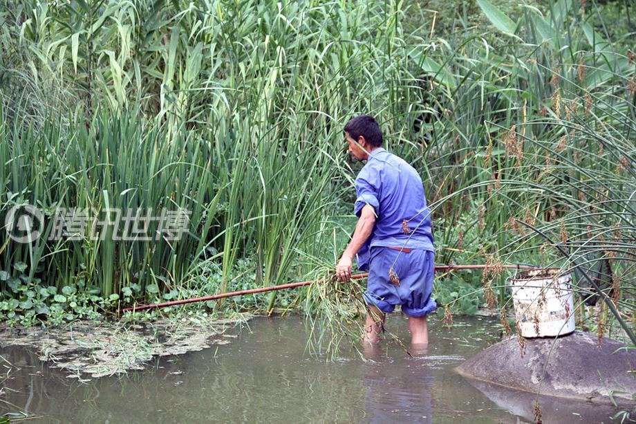 梁世本的工作是清理世博公园整一条河道里的杂草。老梁说没时间去看展馆,他的世博之旅,就是不停地从河的这一头趟到那一头