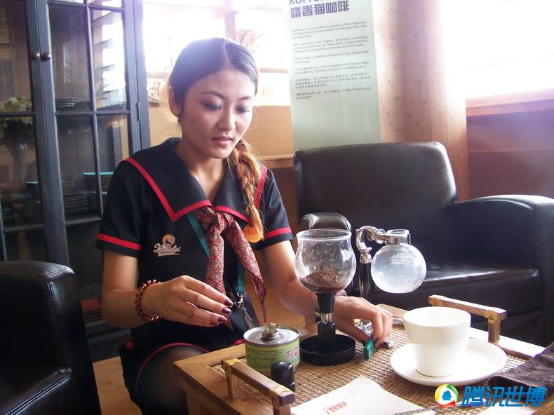 探秘世界上最贵的咖啡——猫屎咖啡 - 小鱼儿 - 小鱼儿的博客