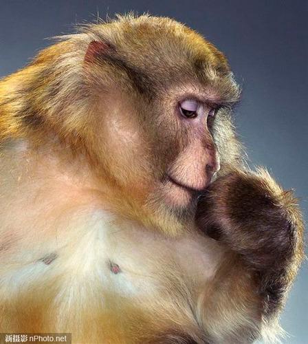最擅长搞怪的 疯狂猴子