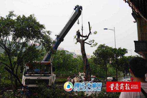 大风吹倒树木 砸死过路摩托车司机