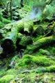 高清:穿越《魔戒》中的诡秘丛林