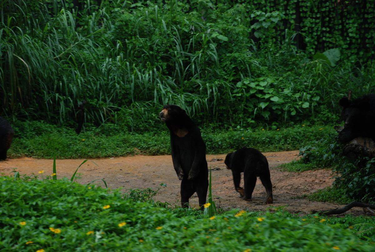 长隆香江野生动物园——真稀动物集锦_腾讯·大楚网