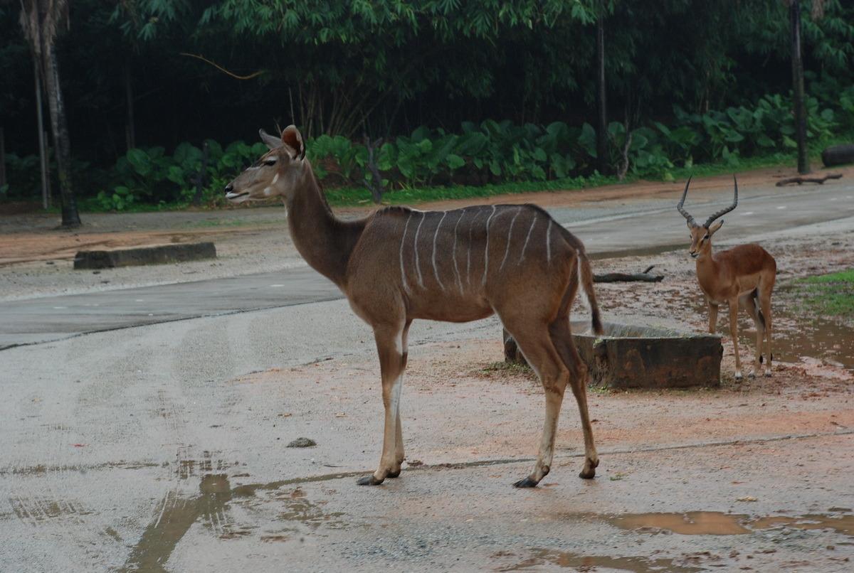 长隆香江野生动物园——真稀动物集锦 图库首页收藏