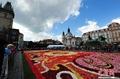 高清:布拉格15万朵秋海棠拼缀巨幅鲜花地毯
