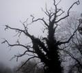 高清:盘点世界各地恐怖奇异的大树