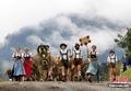 高清:德国举行古老赶牛仪式庆贺放牧归来