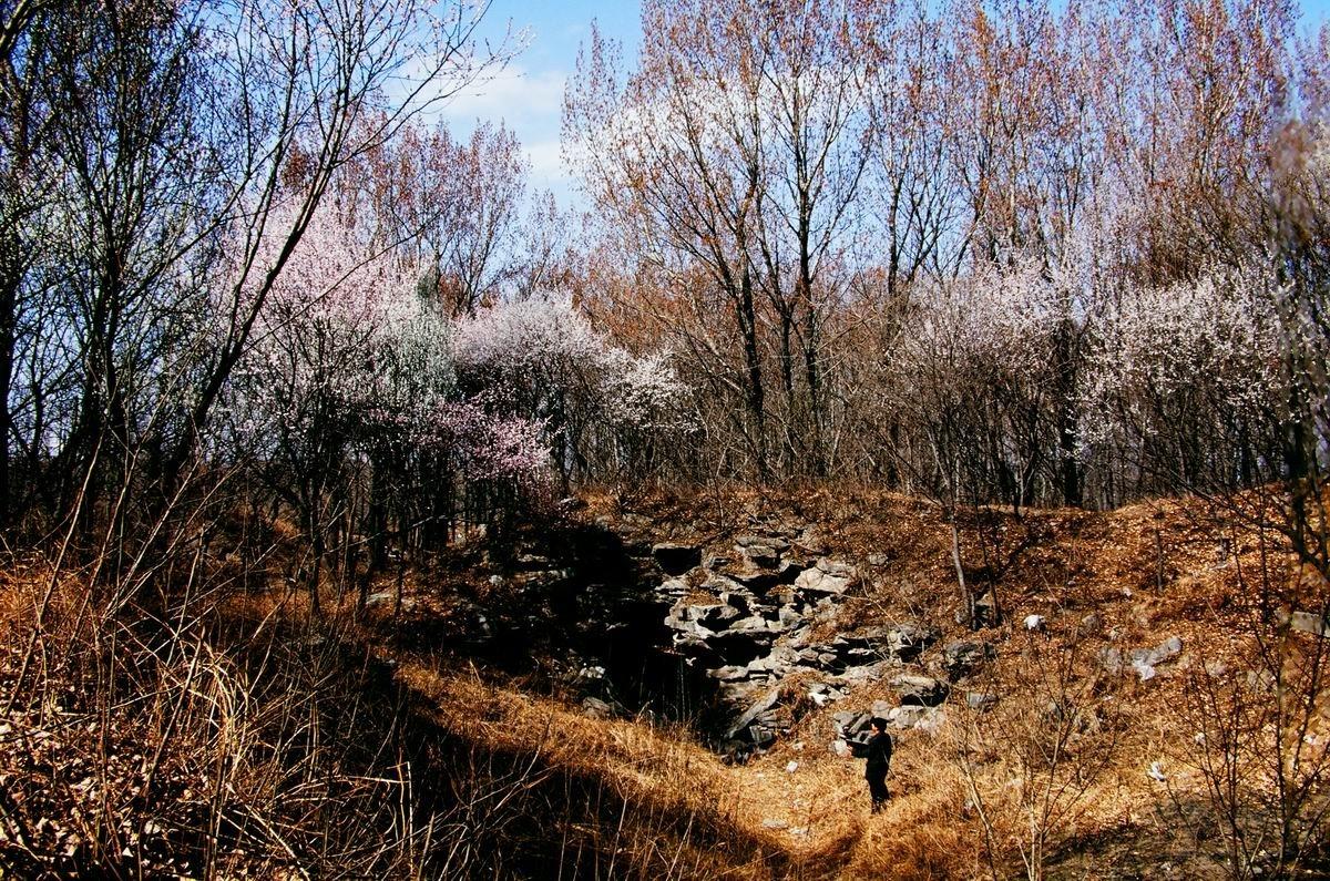 圆明园首席摄影师刘继文作品 - 冰冰 - xianger