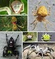 组图:无奇不有 大自然八种最神奇的微笑蜘蛛