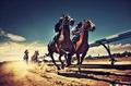 高清:惊险绝美的赛马激情美图欣赏