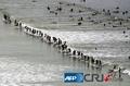 高清:南非95人集体在同一个波浪上冲浪