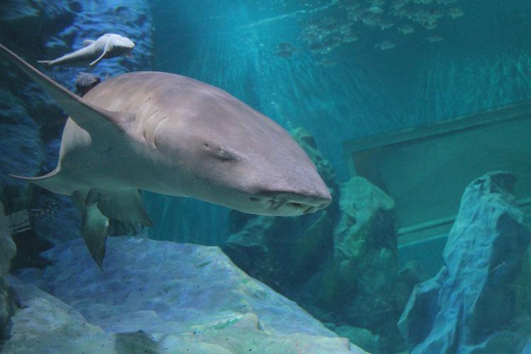 天津海昌极地海洋世界由极地海洋动物馆,阳光海游城,酒店式公寓,城市