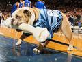 组图:篮球馆上演宠物秀 狗狗叼骨头招摇过市