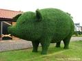 高清:英国园艺大师打造灌木小猪 憨态可掬