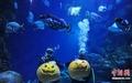 高清:潜水员水下雕南瓜宣传水族馆万圣节