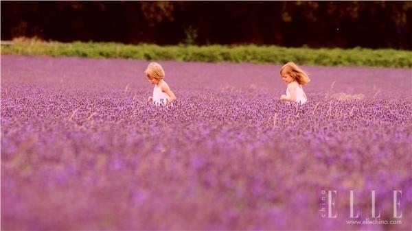 法国普罗旺斯:走入熏衣草的紫色世界