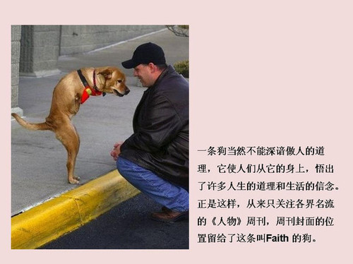 组图:坚强小狗两只腿直立行走 - china.wangxin - china.wangxin的博客