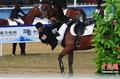 高清:哈萨克斯坦坠马女选手坐骑已被安乐死