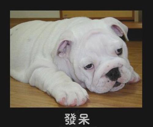 表情:可爱猫狗的a表情组图秀喜欢你表情图片图片