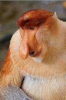 世界10大最珍稀猴族 巴西夜猴会发出诡异鸣叫