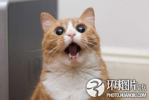 极致:猫的组图表情我表情包把了撩你图片