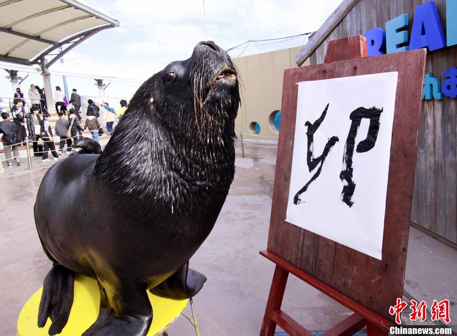 日动物园海狮写汉字迎新年
