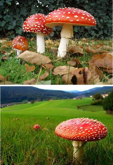 世界上10种最奇特的蘑菇