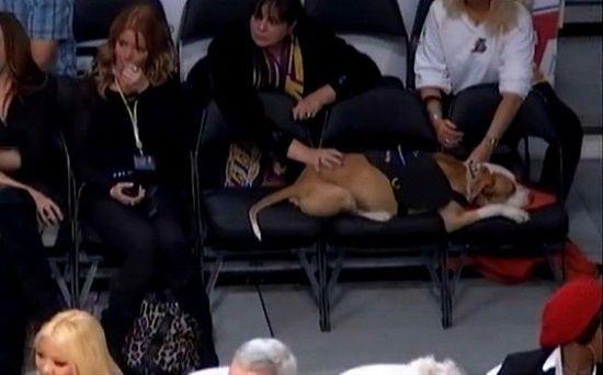 组图:湖人贵宾席竟给狗 是谁请它看科比打球