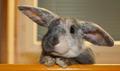 组最萌的可爱兔兔