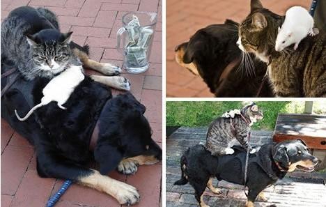 让你心中充满爱的动物友情