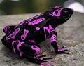 世上最奇怪的青蛙