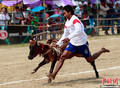 泰国赛牛大会多欢乐多