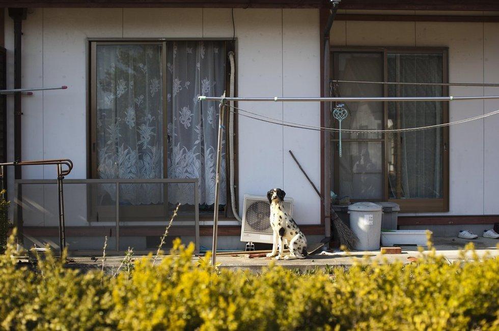 [转载]12583--日本福岛核泄漏事故禁区最新照片