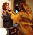 大型凶悍猛犬