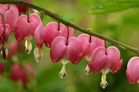 组图:自然界的神奇植物 艳丽叶片酷似红唇